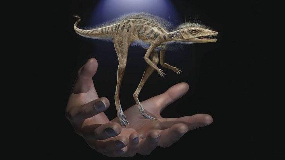 Descubren el pariente enano de los dinosaurios