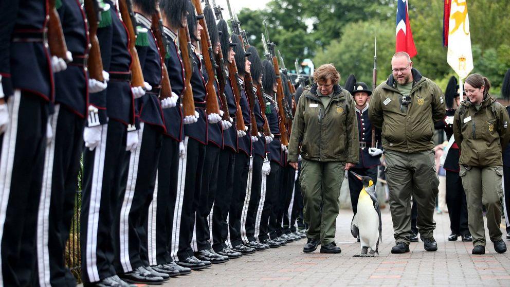 El pingüino real escocés que se convirtió en General del Ejército de Noruega