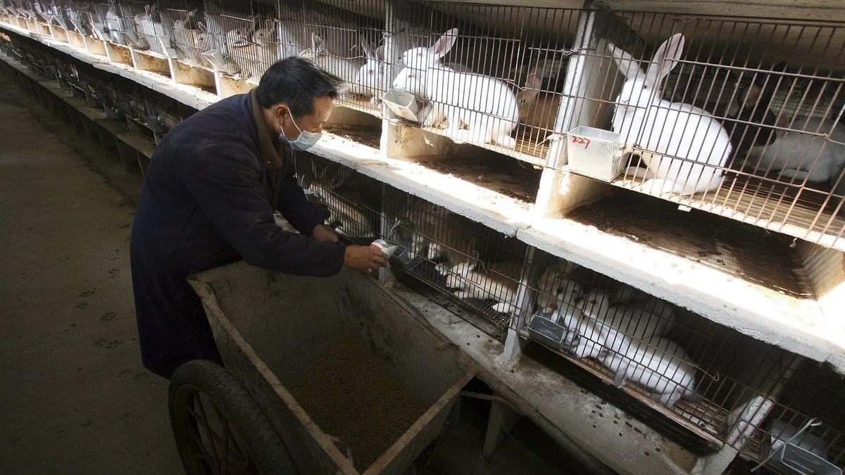 Ganadería La Ola De Calor Aniquila A Los Conejos En Las Granjas Vamos A Perder El 40