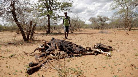 China confirma 201 casos de la nueva neumonía y sequía en el sur de África: el día en fotos