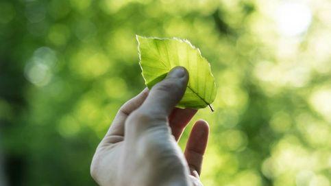 Invertir en sostenibilidad: los ESG son más rentables y menos volátiles
