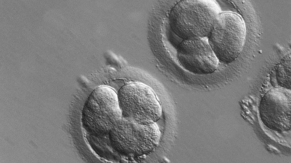 Foto: Un estudio recogido en 'Nature' a principios de agosto utilizaba CRISPR para corregir una enfermedad hereditaria en embriones (Zeiss)