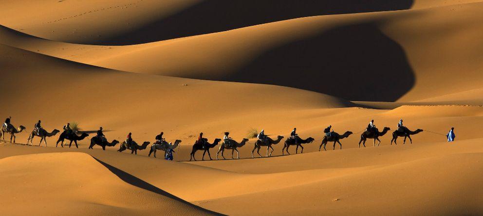 Foto: Explora el desierto a lomos de un camello gracias a Google Maps