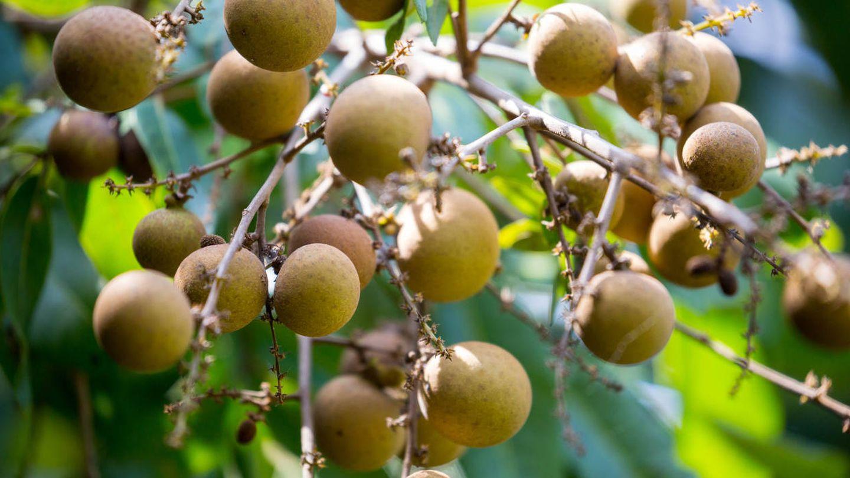 El fruto de Vietnam. (iStock)