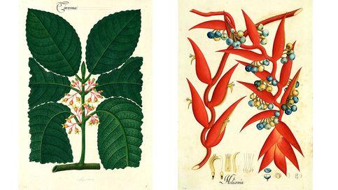 La Fábrica publica las láminas de Mutis y una guía de artesanos