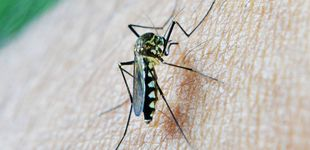 Post de Aprobado el primer fármaco contra la malaria en 60 años