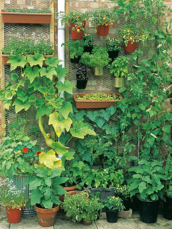 DIY Un huerto en casa aprende a cultivar pimientos y mucho ms