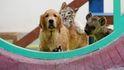 Reino Unido aumentará las penas por maltrato animal a cinco años de cárcel