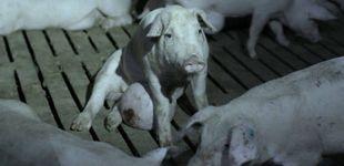 Post de Dos supermercados belgas retiran productos de El Pozo por 'Salvados'