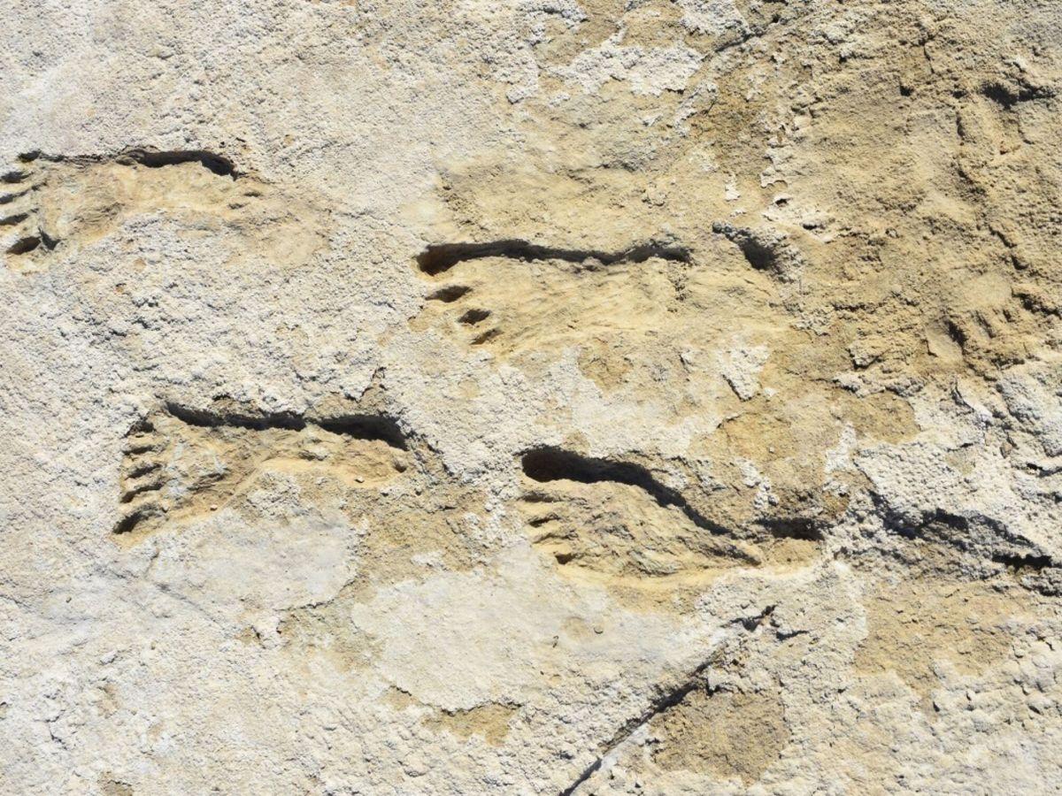 Foto: Fotografía del hallazgo (EFE/David Bustos/White Sands National Park)