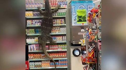 Un lagarto de tres metros se cuela en una tienda de Tailandia provocando el pánico