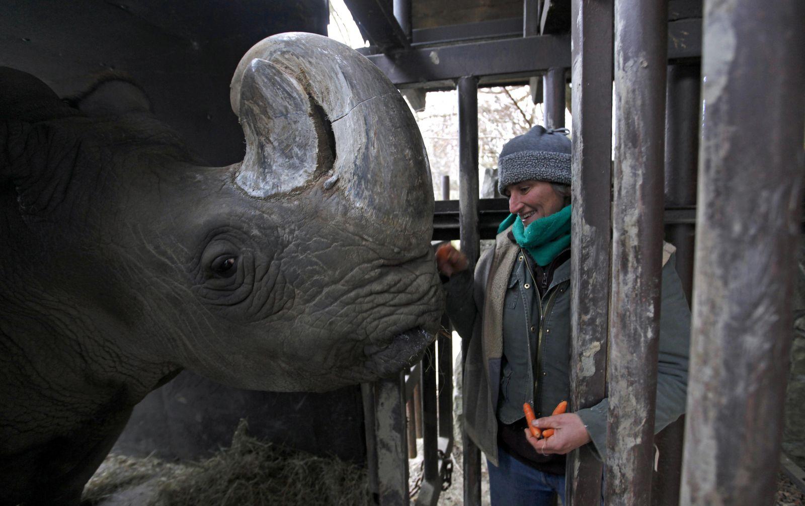 Foto: La cuidadora Beyy White junto a Sudán en el zoológico de Dvur Kralove, antes de su traslado (Reuters).