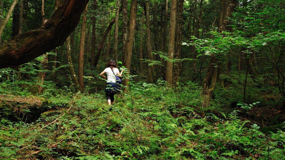 Foto: El bosque de los suicidas en Aokigahara. (CC/ajari)