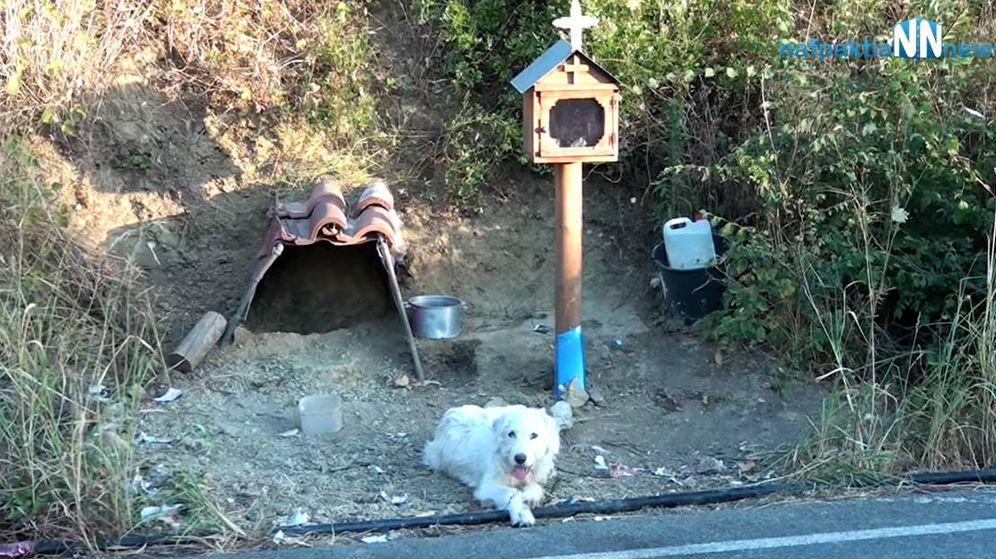 Foto: Sus vecinos le llevan agua y comida cada día, ya que no se quiere mover de ahí (Foto: YouTube)