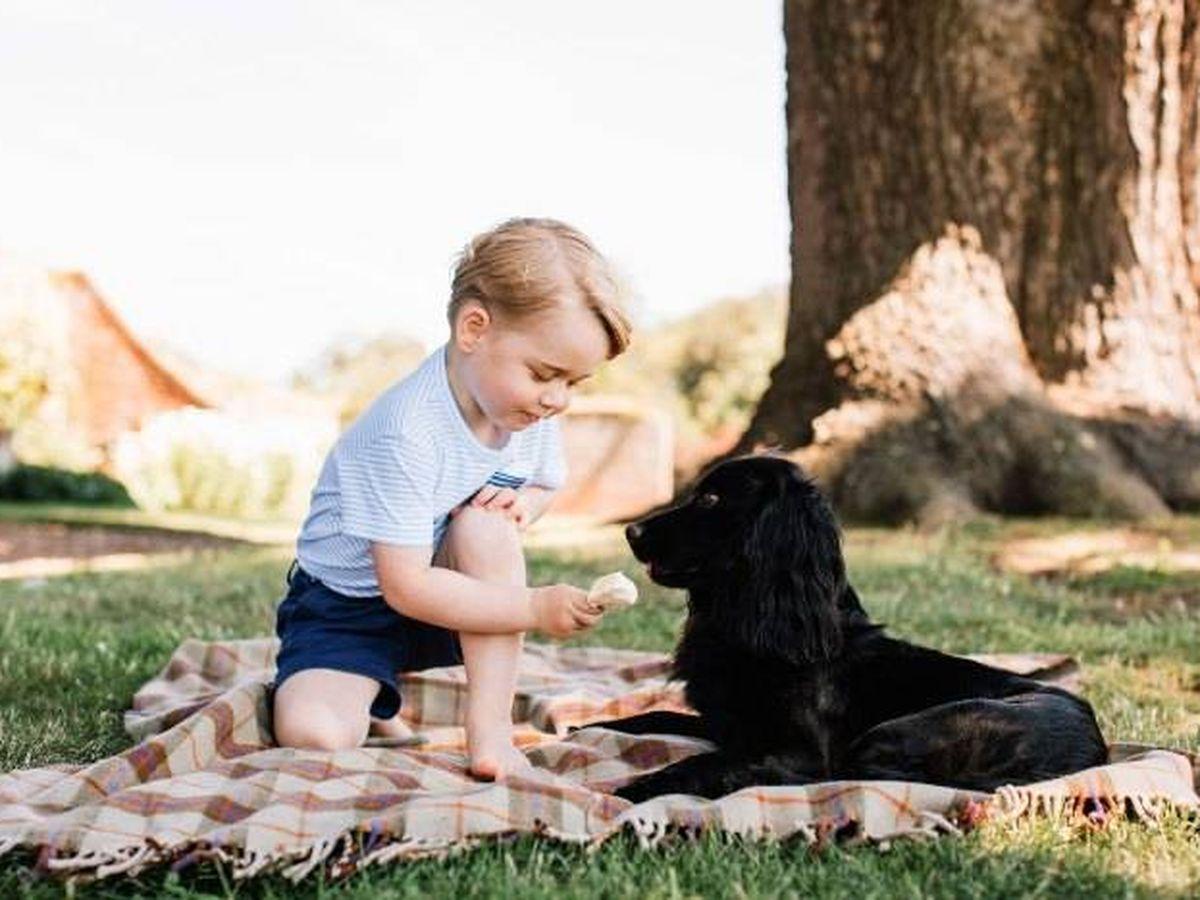 Foto: El príncipe George, con Lupo. (Kensington Palace)