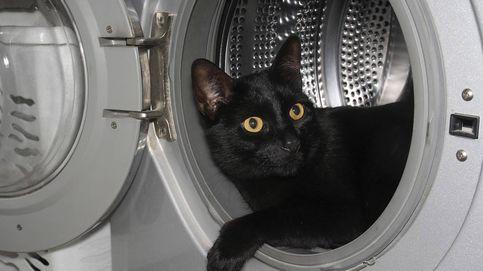 Resucitan a un gato después de pasar 20 minutos dentro de una lavadora en uso