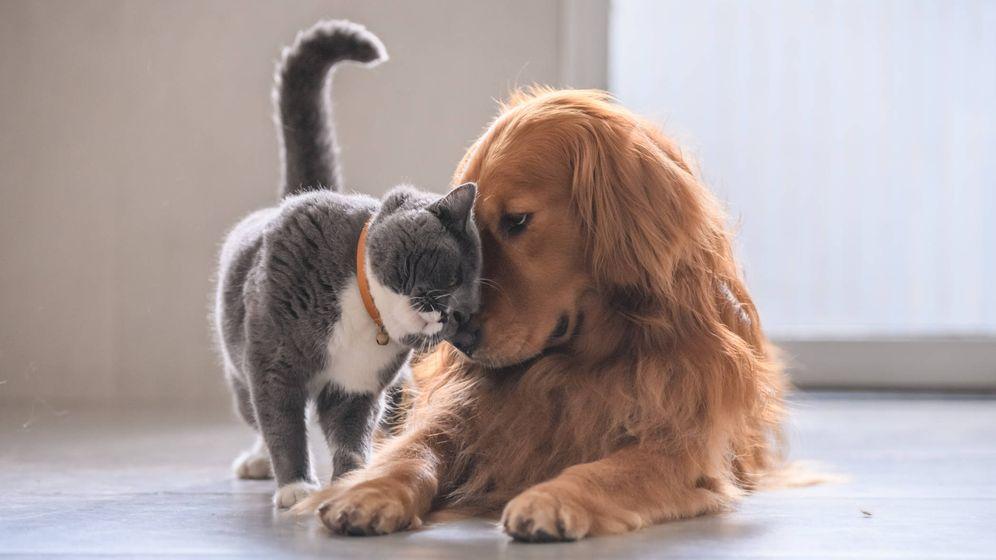 Foto: El mejor amigo del hombre y el segundo mejor amigo del hombre. (iStock)
