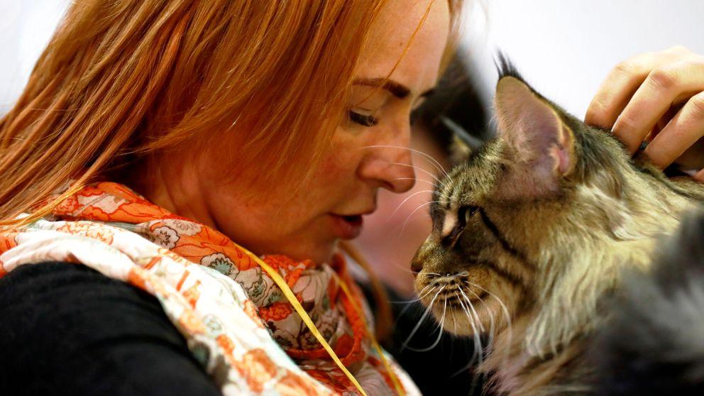 Así se debe acariciar a un gato (según la ciencia) para que de verdad le guste