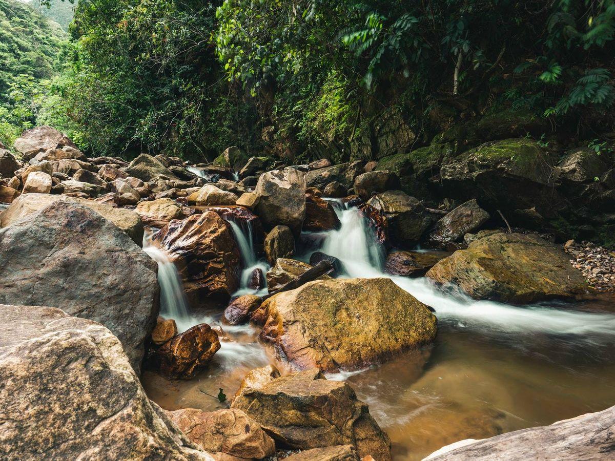 Foto: La inhalación y exhalación de CO2 no es la única forma en la que el bosque contribuye al terioro ambiental (Unsplash)