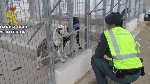 Muere un hombre tras ser atacado por cinco perros peligrosos en Alicante