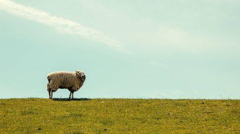 La lana reivindica su papel como materia prima ecológica en Europa