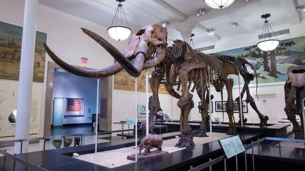 El clima hizo a los mastodontes grandes migrantes (y provocó su extinción)