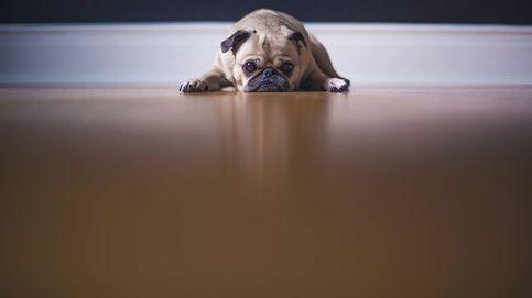 ¿Cuáles son los olores que menos gustan a los perros?
