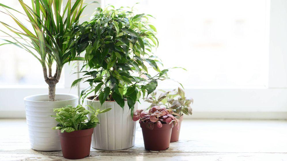 Contaminaci n las mejores plantas para purificar el aire for Plantas grandes de interior resistentes
