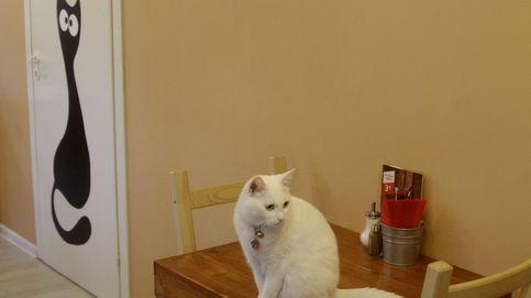 Científicos descubren que tu gato entiende perfectamente su nombre cuando le llamas
