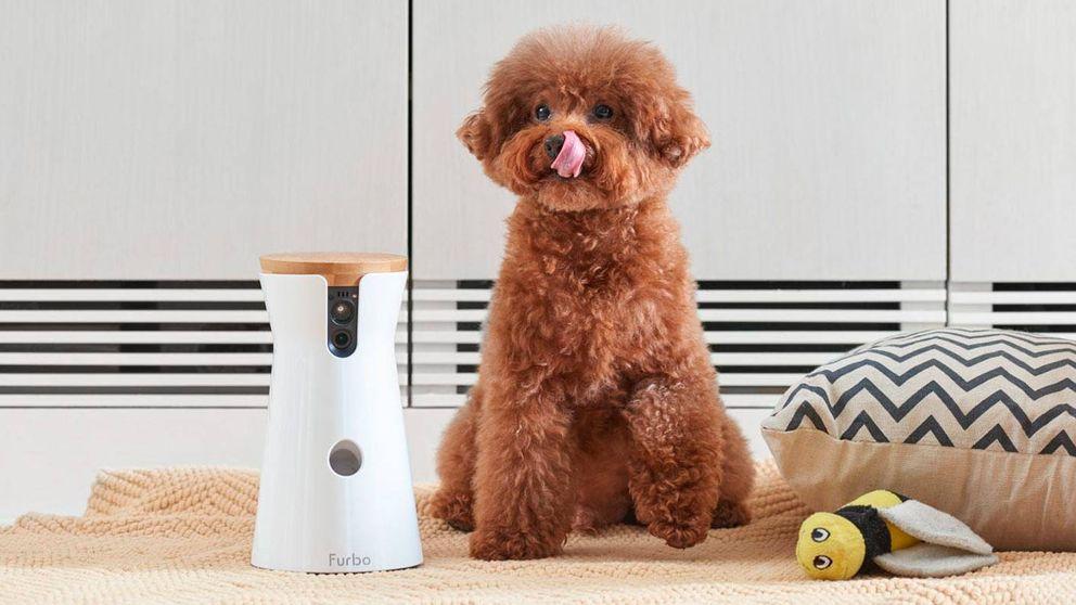 Un lanzagolosinas, un collar inteligente... Los gadgets más cool para tu mascota