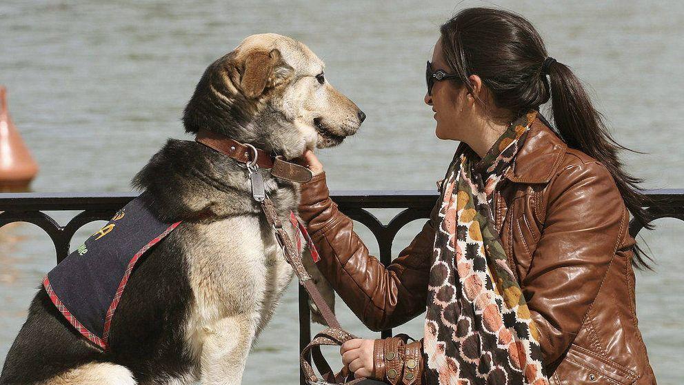 Por ningún español ha ingresado en prisión por maltratar a un animal