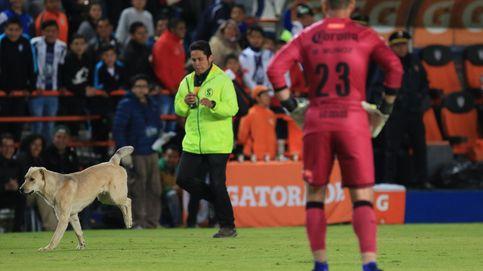 Un perro con habilidades futbolísticas irrumpe en un partido en Turquía