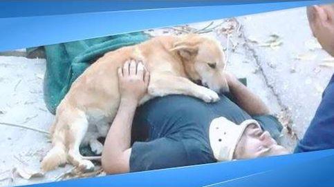 El perro que no se separó de su amo tras quedar inconsciente