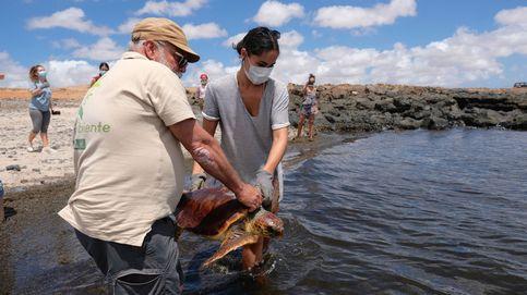 Miles de voluntarios ayudan a los espacios naturales cada verano