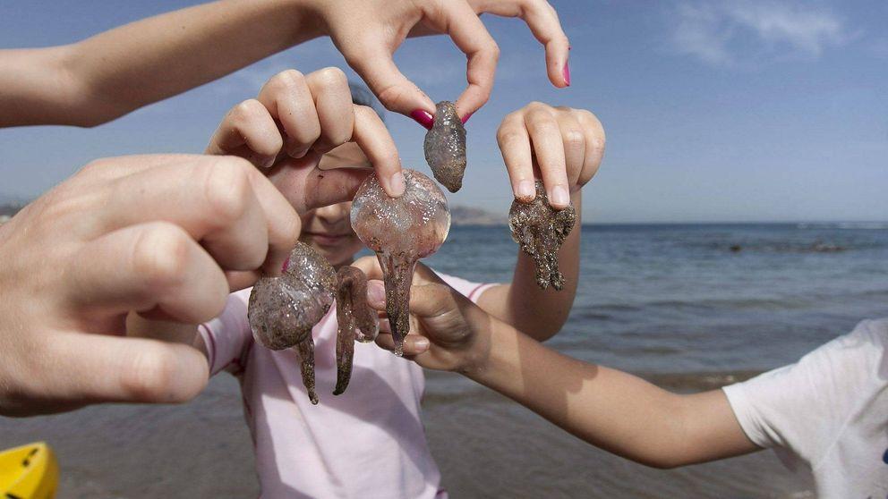 Medusas: cómo actuar y qué hacer ante sus molestas y dolorosas picaduras