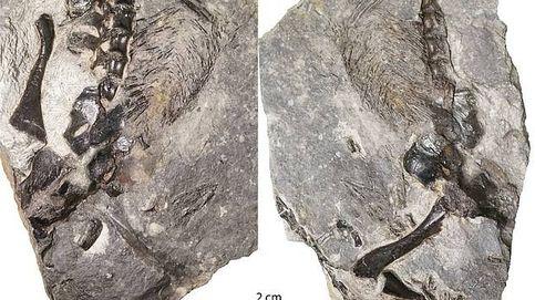 La primera muestra de 'amor' animal entre padres e hijos, hace 300 millones de años