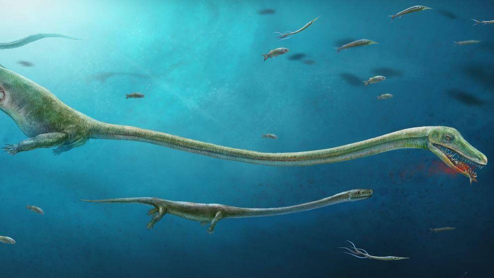 Encuentran por primera vez el fósil de un reptil preñado