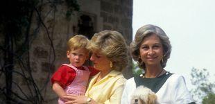 Post de La familia real, sus mascotas y el criadero de perros de don Juan Carlos