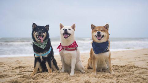 Las mejores playas para perros que hay en Europa