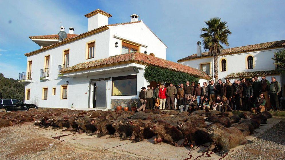 Foto: Imagen de la finca Puerto del Toro con numerosos jabalíes muertos en el suelo.