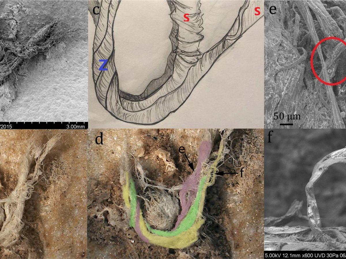 Foto: Vistas de la cuerda. Foto: Scientific Reports