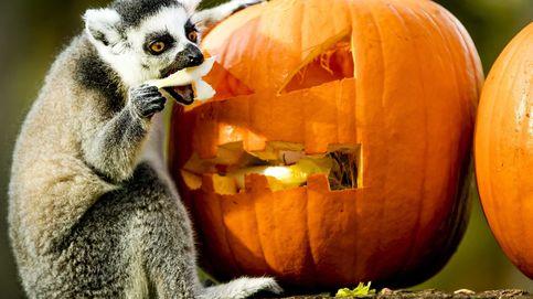 Videojuegos en Madrid y fin de semana de Halloween: el día en fotos
