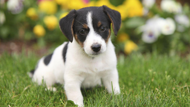 Foto: Si no hacemos nada, este perro será sacrificado... ¿O no? (iStock)