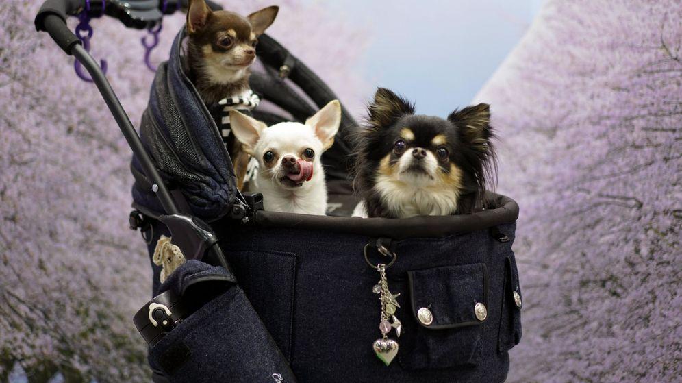 Foto: Feria internacional para las mascotas interpets en tokio