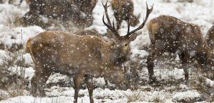 Post de Condenan a un cazador furtivo a ver 'Bambi' una vez al mes durante un año