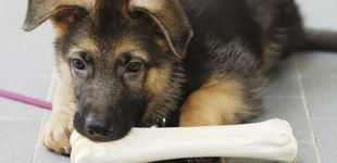 Post de La razón por la que tu perro se pone tan nerviosos cuando tú lo estás