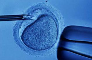 Foto: Más de 350 proteínas diferencian los embarazos in vitro de los naturales