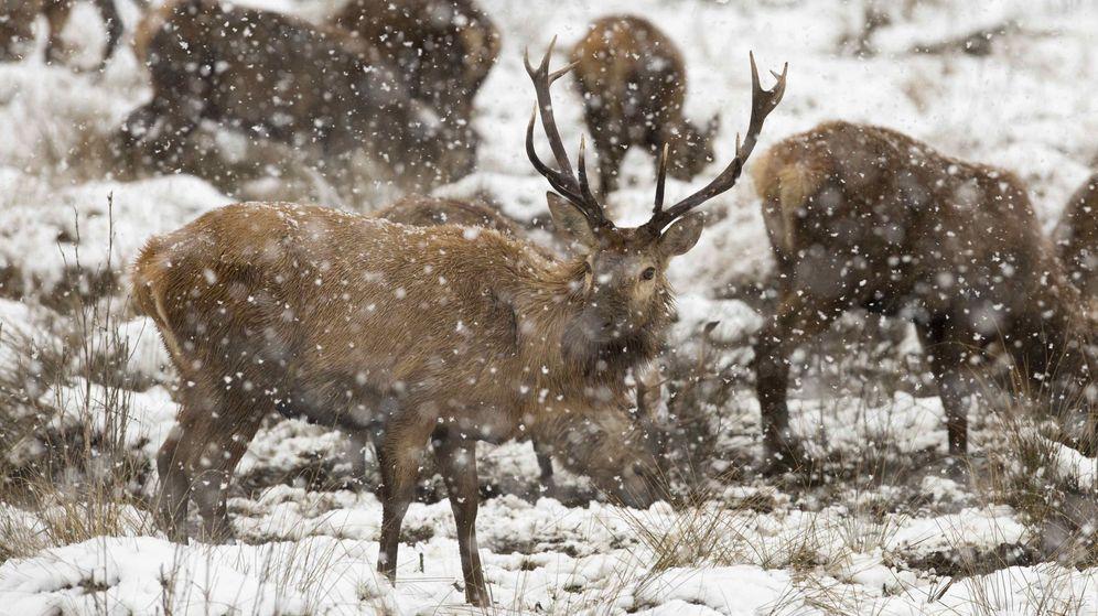 Foto: Los furtivos mataban a los ciervos sobre todo por la noche (EFE/David Aguilar)