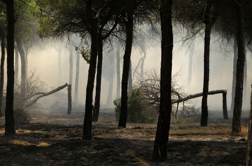 Foto: Aspecto que presentan los alrededores de Mazagón, en Huelva, en el incendio que continúa acechando el Espacio Natural de Doñana. (EFE)