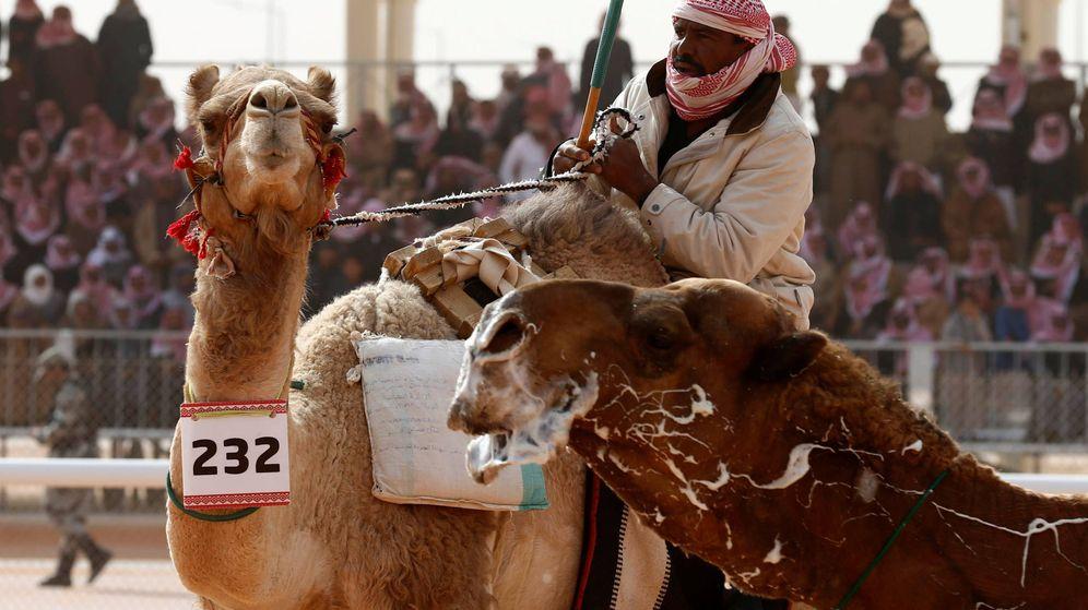 Foto: Doce camellos han sido descalificados por usar botox en el King Abdulaziz Camel Festival (Reuters)